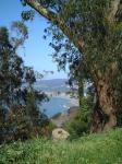 stumpy view