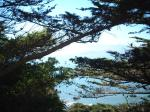 foghorn through trees